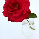 red rose in glas by OldaSimek
