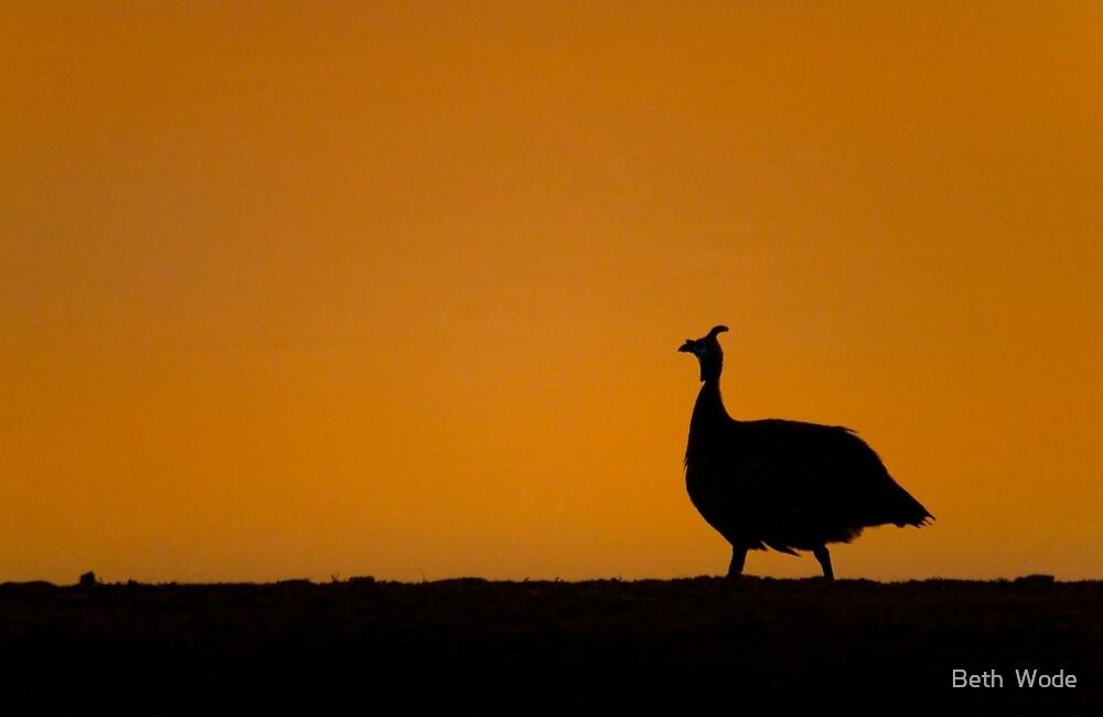Guinea Fowl Sunset - Etosha NP Namibia. by Beth  Wode