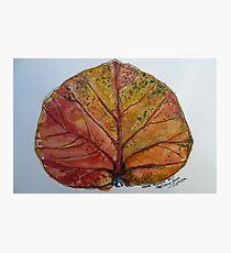 Leaf. Nha Trang Vietnam. Pen and wash 2013Ⓒ Photographic Print