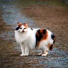 Calico On The Prowl by Cynthia48