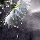 The Sprinkler. by Steve Chapple