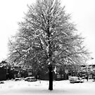 Snow Tree by Stephen Robinson