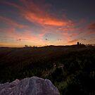 Forestry Sunset by Michael Treloar
