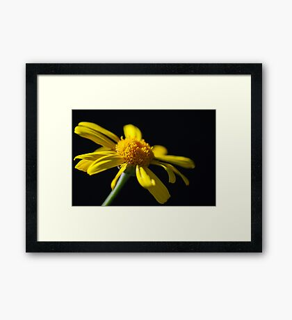 Imperfect Beauty Framed Print