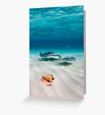 Two stingrays & a shell went into a sandbar... Greeting Card