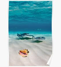Two stingrays & a shell went into a sandbar... Poster