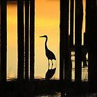 Silhouette Of A Bird by Cynthia48