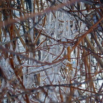 Ice Bush by MarthaMedford