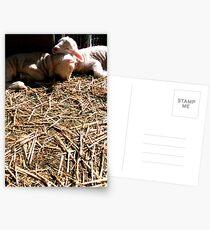 Loving Lambs Postcards