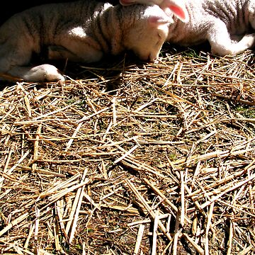 Loving Lambs by emilykperkin
