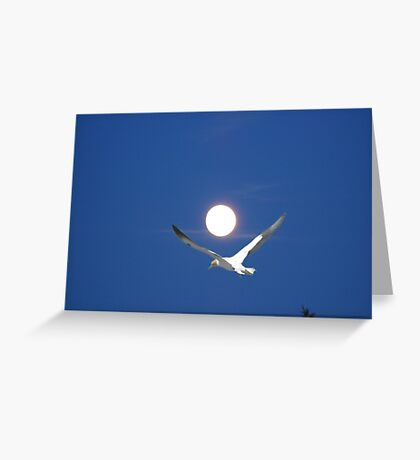 Moon and bird (Ganet) Greeting Card