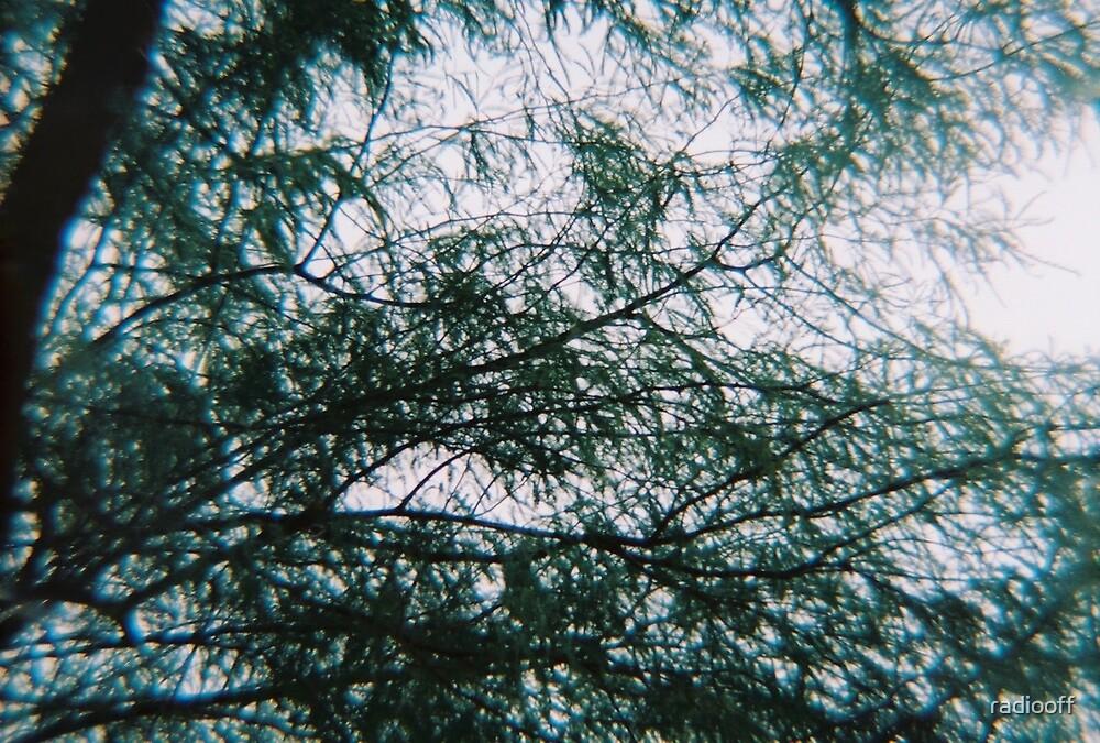 dreamy trees by radiooff