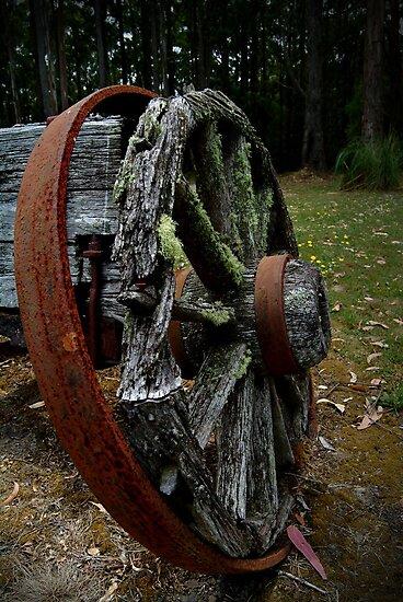 Mossy Wagon Wheel,Otway Ranges by Joe Mortelliti