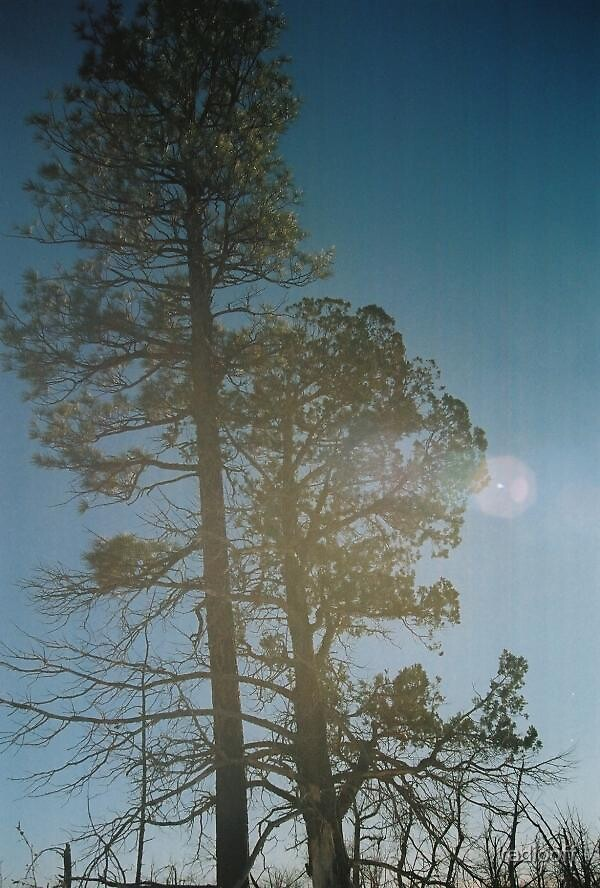 trees in the sun by radiooff