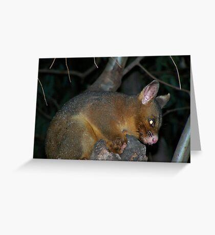 Ring-tailed Possum Greeting Card