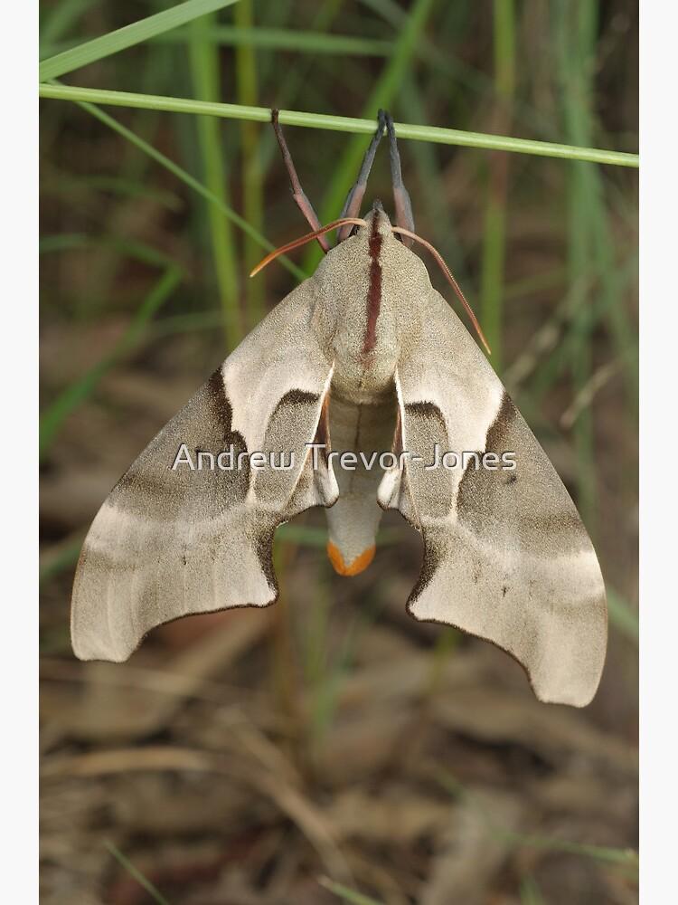 Moth by andrewtj
