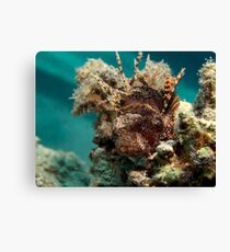 Dwarf lionfish Canvas Print