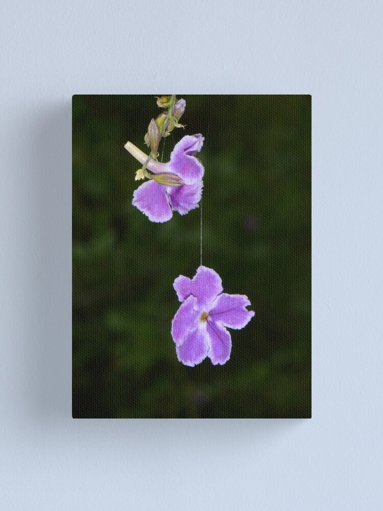Alternate view of Hanging by a thread Canvas Print