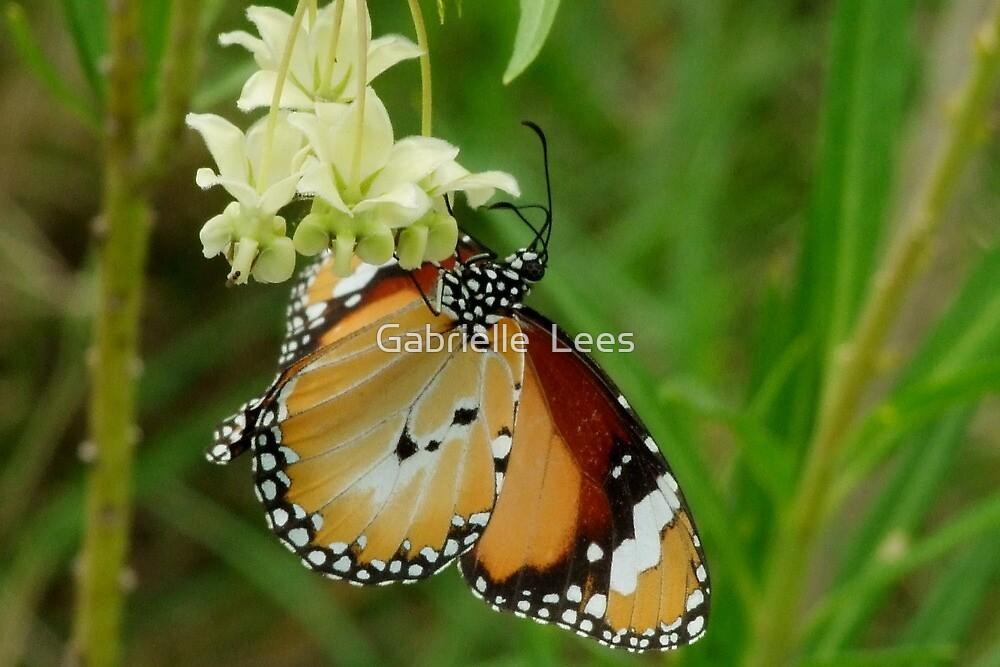 Lesser Wanderer Butterfly - Danaus chrysippus  by Gabrielle  Lees