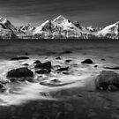 A Cold Winter Night by Mieke Boynton