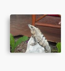 Iguana on rock in Playa del Carmen, Mexico Canvas Print