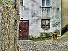 A Stray Dog - Guimaraes, Portugal by T.J. Martin