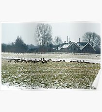 Winter farmland with geese Poster