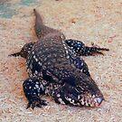 Tegu Lizard by WildestArt