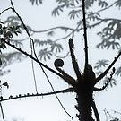 Monteverde Cloud Forest #1 by Christopher Cullen