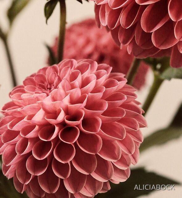 Dahlia Bouquet #2 by ALICIABOCK