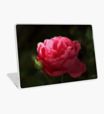 Soft Red Rose In The Evening Light Laptop Skin