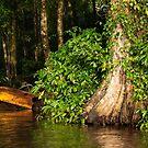Tortuguero Waterways #2 by Christopher Cullen