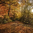 Autmn Woods by Maurice Jelinski