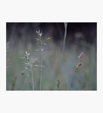 Summer Grass 6 Photographic Print
