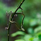 Rough Green Snake by MyFrogCroaked