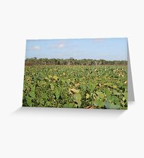 Red Lilly Lagoon - North QLD Greeting Card
