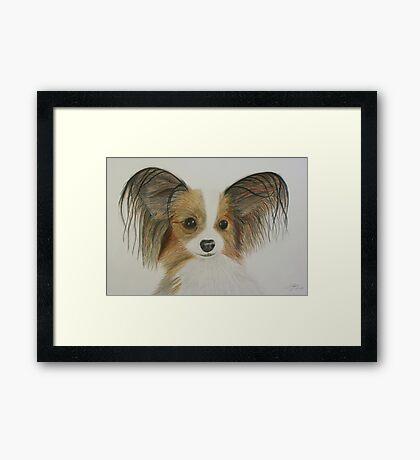 Papillon Framed Print