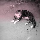 Soft Kitty by Melissa Park