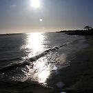 Dog Beach by NancyC