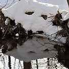 A Winter Reflection by Corkle