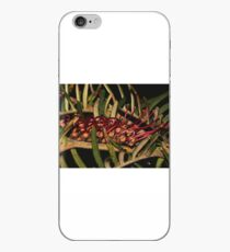 Grevillea caleyi iPhone Case