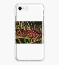 Grevillea caleyi iPhone Case/Skin