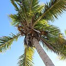 Florida Coconut Palm by Sun Dog Montana