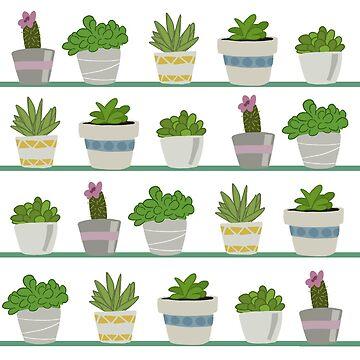colección de cactus de charliecross