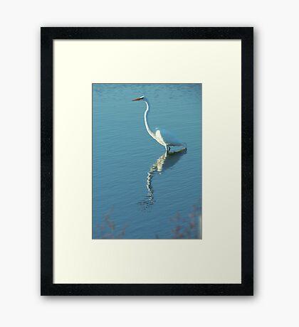 Horicon marsh Egret Framed Print