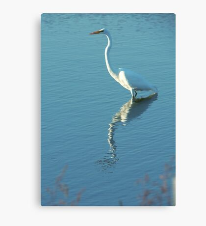 Horicon marsh Egret Canvas Print
