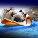 In Dreamworld! by JaninesWorld