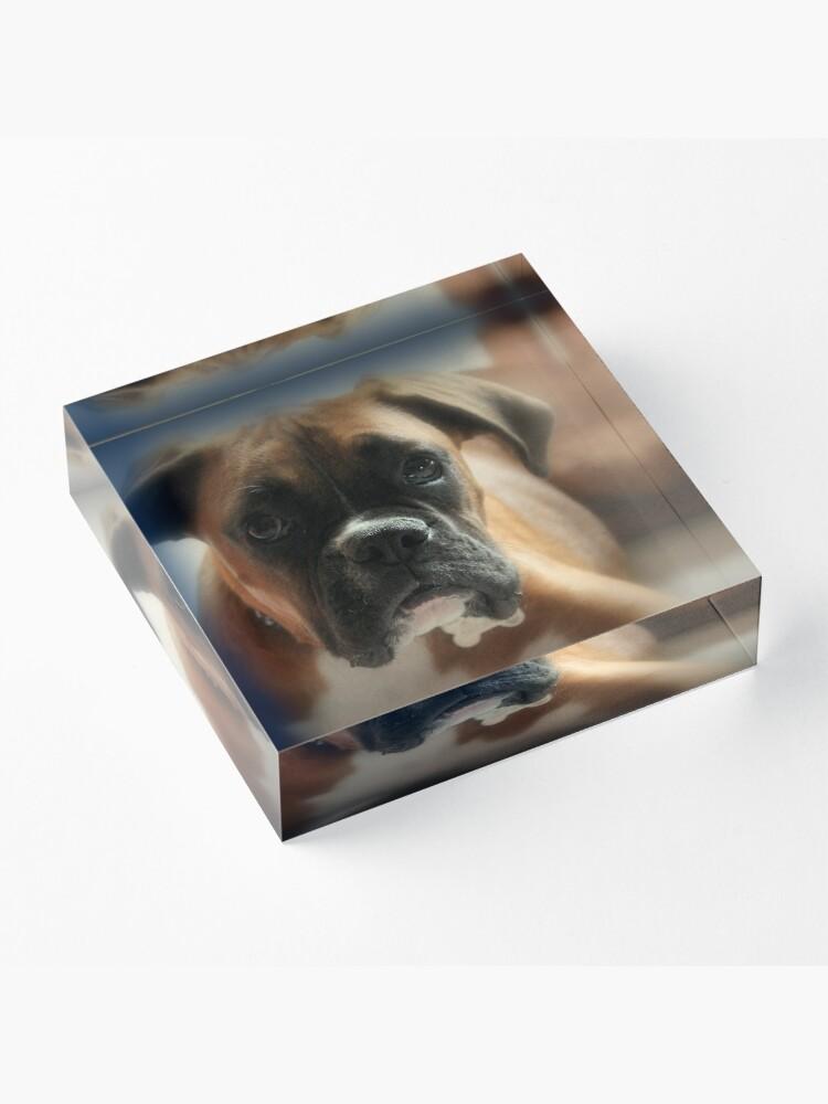 Alternative Ansicht von Gesicht der Unschuld ~ Boxer-Hundeserie Acrylblock