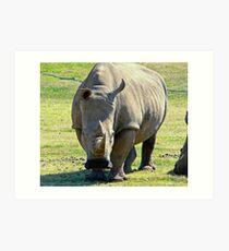 Rhino at Werribee Zoo Australia Art Print