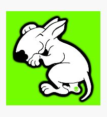 English Bull Terrier Snug Photographic Print